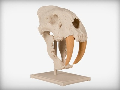 剑齿虎的头骨-3d打印模型