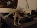 死亡之爪-3d打印模型