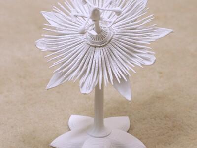 西番莲-3d打印模型
