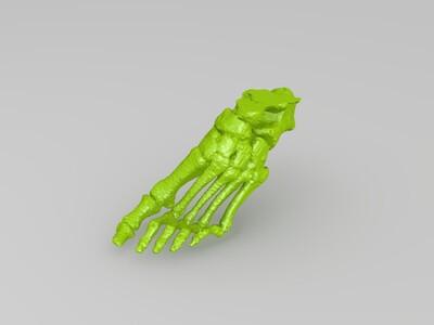 人脚 脚骨-3d打印模型