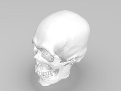 完整颅骨模型-3d打印模型