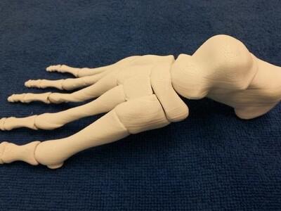 足骨-3d打印模型