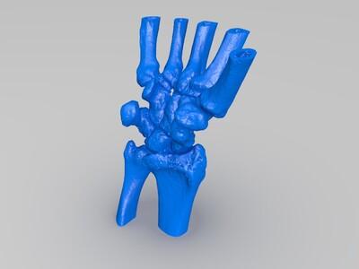 腕关节-3d打印模型