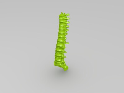 脊柱模型-3d打印模型