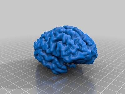 人类的大脑-3d打印模型
