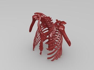 高精模、女性上半身CT骨骼数据-3d打印模型