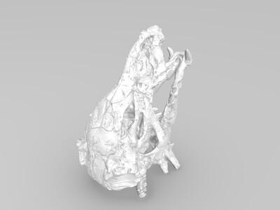 飞龙头骨-3d打印模型