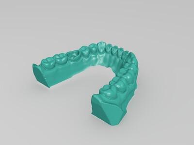 牙仿真模型-3d打印模型