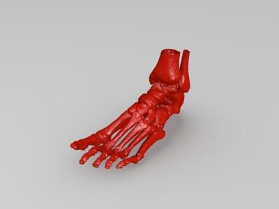 ct脚掌骨复刻-3d打印模型