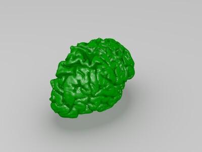 35岁男性左右两半大脑高清核磁共振建模-3d打印模型