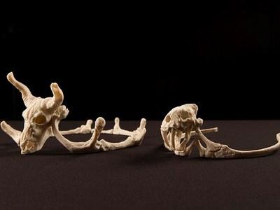 头骨皇冠-3d打印模型