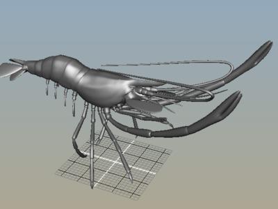 盲虾-3d打印模型