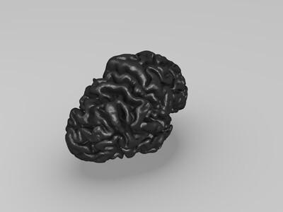 大脑-3d打印模型