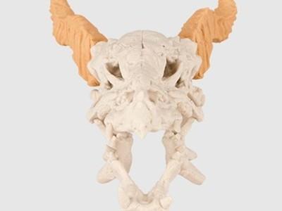 龙头骨-3d打印模型