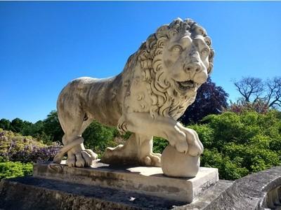 狮子-3d打印模型