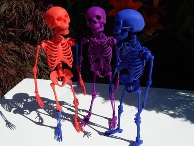 人体骨头结构-3d打印模型